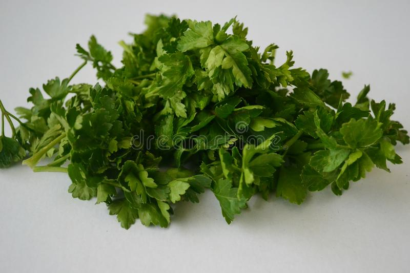 Parsley, mint, dill and onion royalty free stock photography