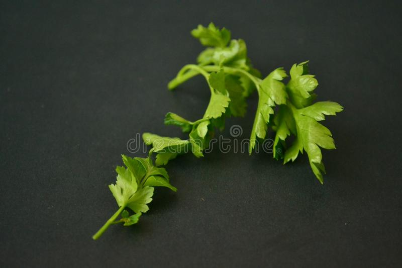 Parsley, mint, dill and onion royalty free stock images