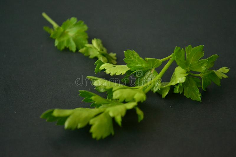 Parsley, mint, dill and onion royalty free stock photos