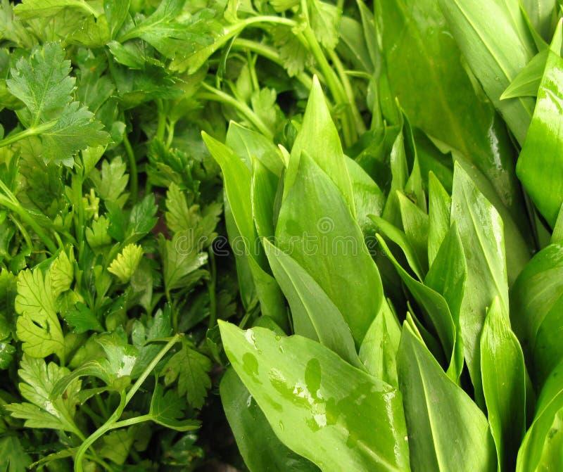 Parsley- och ramsonleafgrönsaker royaltyfri foto