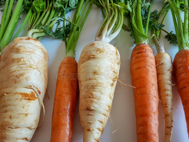 Parsley roots and carrots fresh vegetables isolated, white background, orange yellow green color. leaf, healthy diet stock images