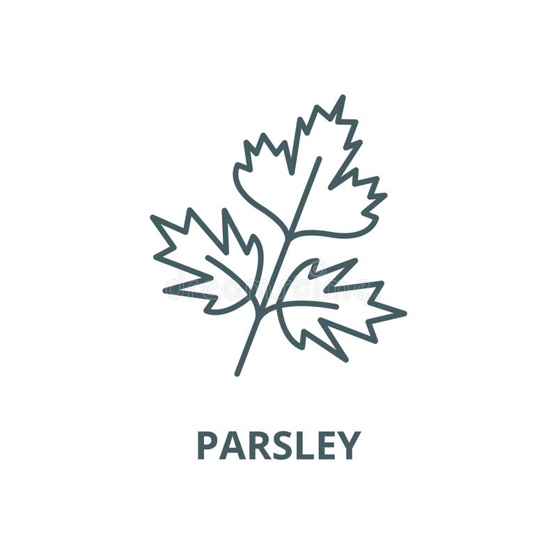 Parsley vector line icon, linear concept, outline sign, symbol royalty free illustration
