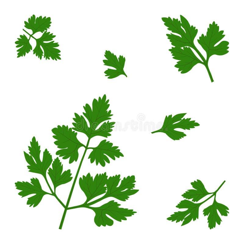 Vector twigs of fresh parsley. vector illustration
