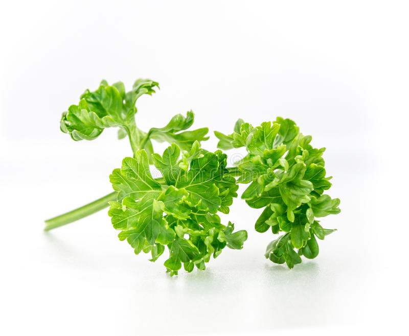 The parsley vegetable on white isolate background.