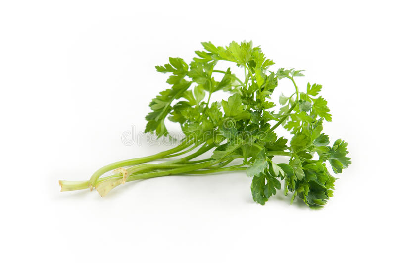 Download Parsley On A White Background Stock Image - Image: 21078779