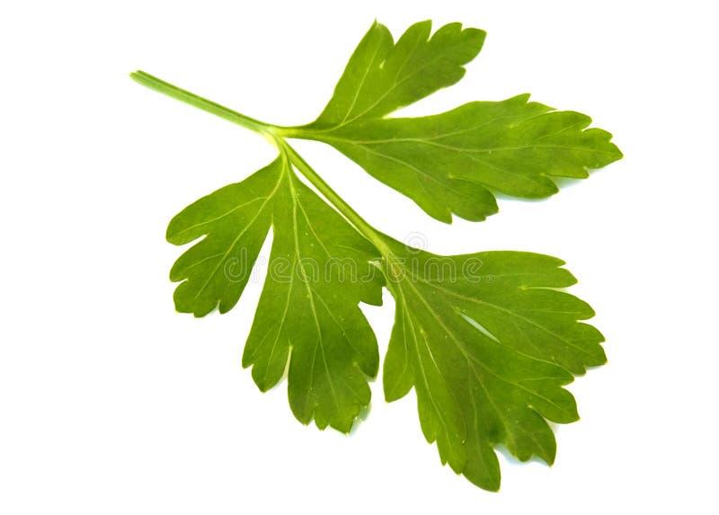 parsleysprig royaltyfria bilder