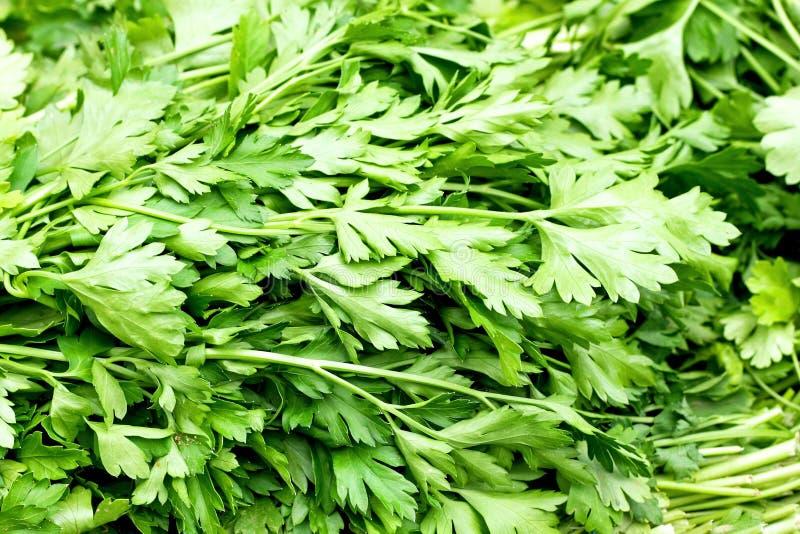 Download Parsnip stock image. Image of green, vegetables, natural - 6224847