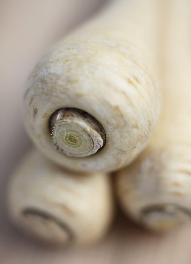 Download Parsnips stock image. Image of vegtables, vegetarian, healthy - 2672083