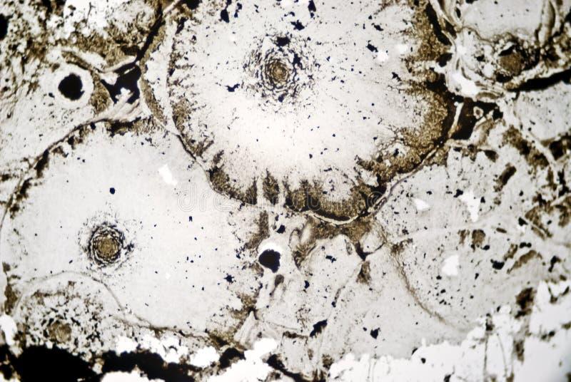 Partículas de hollín microscópicas imágenes de archivo libres de regalías