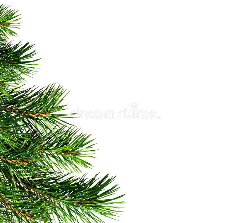 Part of Christmas tree stock photography