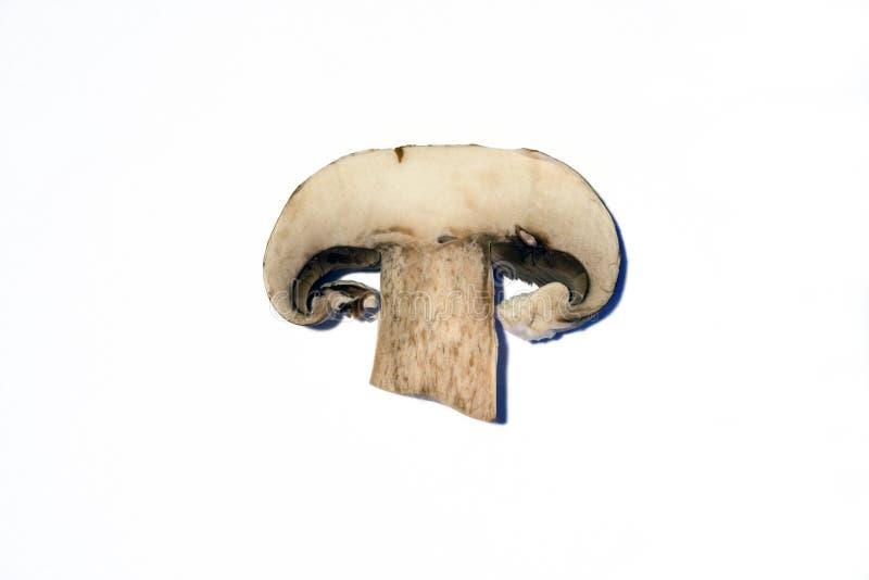 Part de champignon de couche images libres de droits