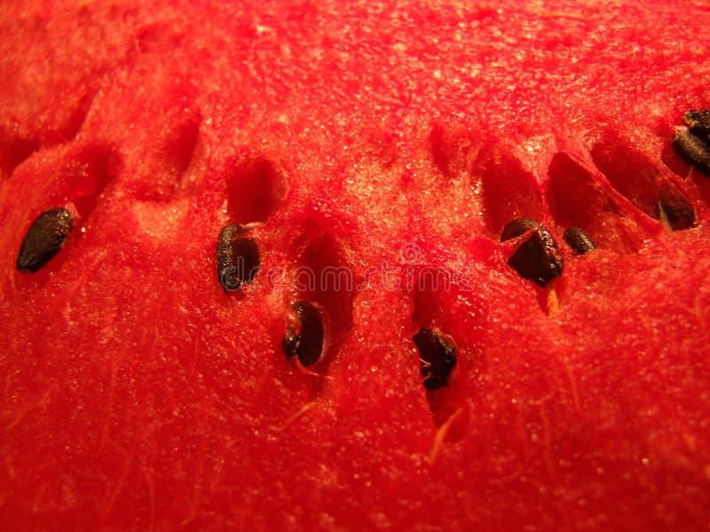 Part de melon images libres de droits