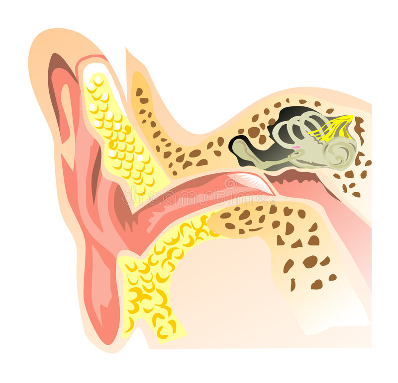 Download Part Of The Ear And Hearing Stock Illustration - Image: 7405603