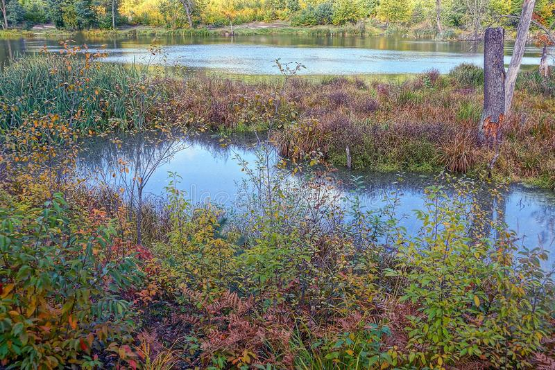 A part of the forested green forest. Forest lake overgrown with colorful autumn vegetation royalty free stock image