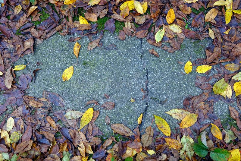 Part of the gray road in the fallen brownish yellow leaves. Gray stone background in colored fallen leaves royalty free stock photo