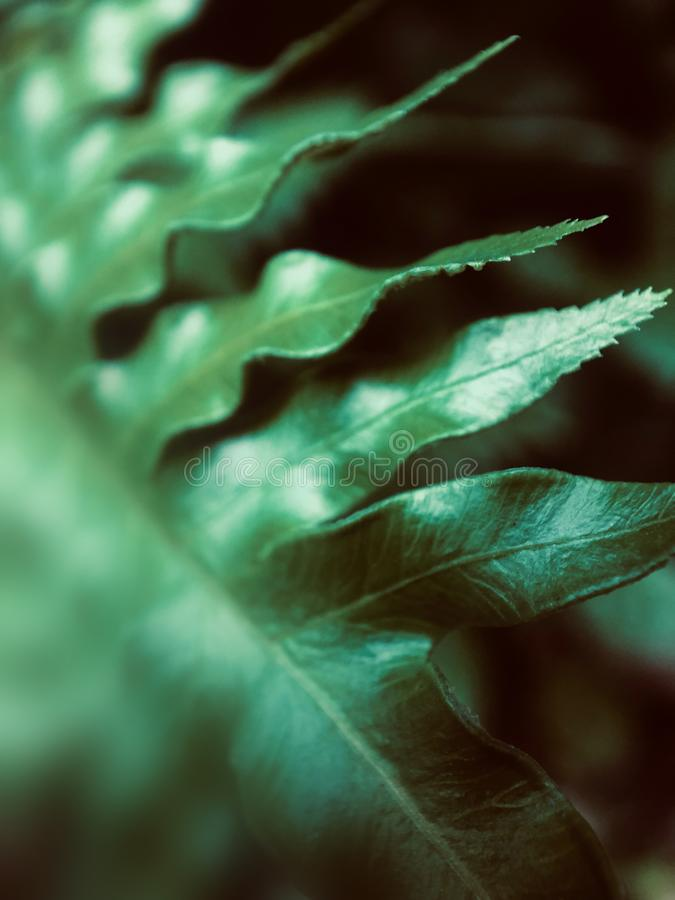 Part of the green leaf focuses on the foreground. Green leaves present a natural curve.The green leaves stay quietly in the corner giving a feeling of peace stock photography