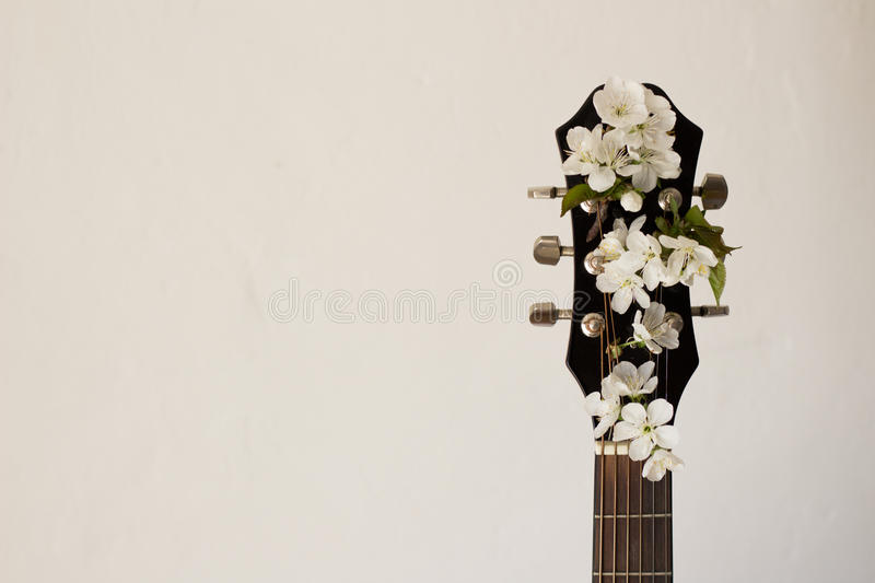 Part of the guitar with blossom cherry stock photography