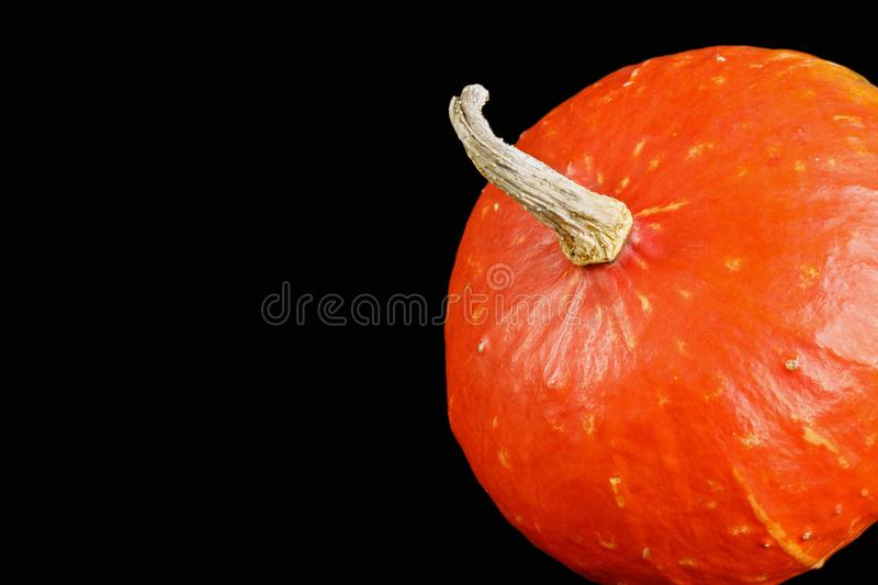 Part of a large red pumpkin with dried tops on a black background for Halloween design. Isolated on a black background. Copyspace stock photo