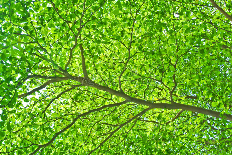 Download Part Of Tree Branch And Leaf Stock Photography - Image: 24469812