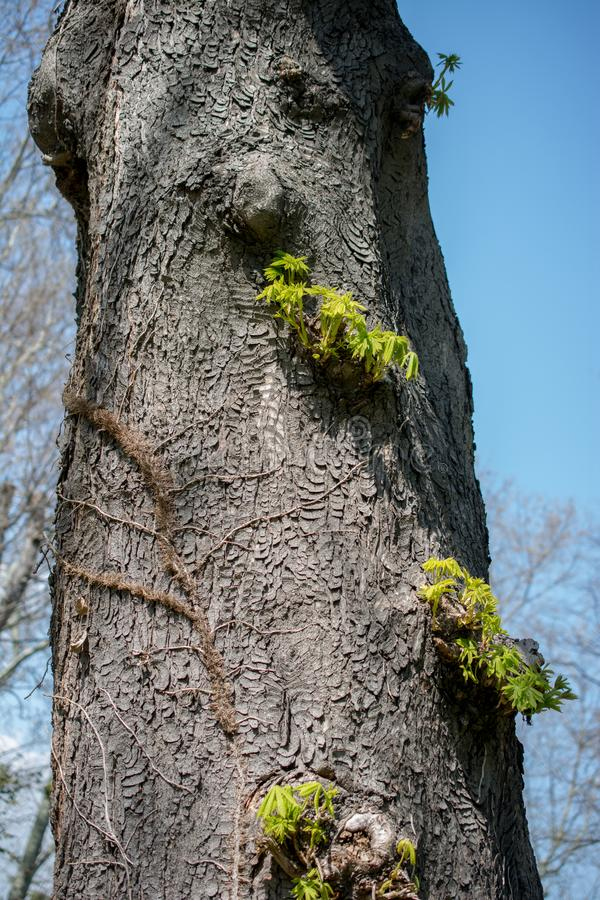 Part of a tree in a garden in view. Part of a tree in a garden is in view stock image