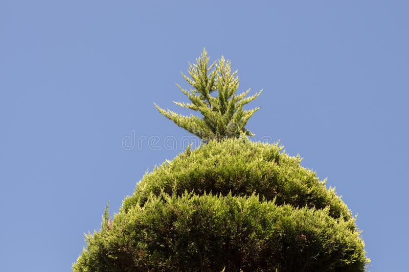 Part of a tree in a garden in view. Part of a tree in a garden is in view stock photo
