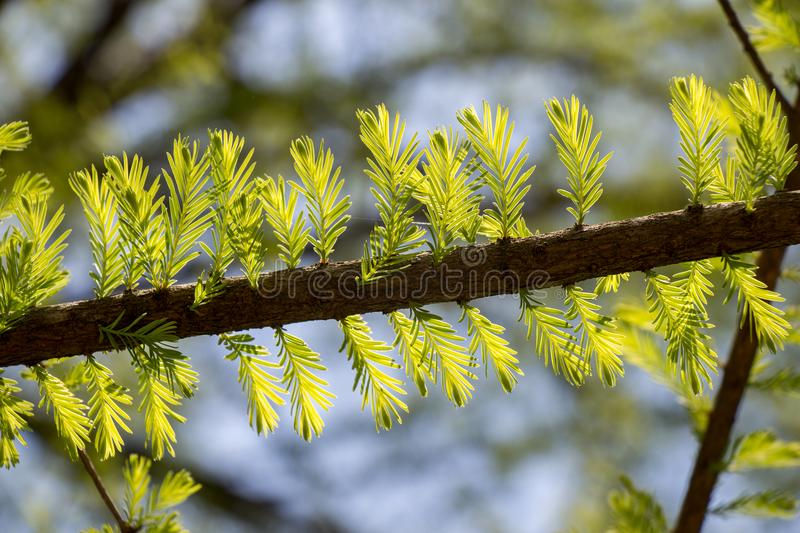 Part of a tree in a garden in view. Part of a tree in a garden is in view royalty free stock photo