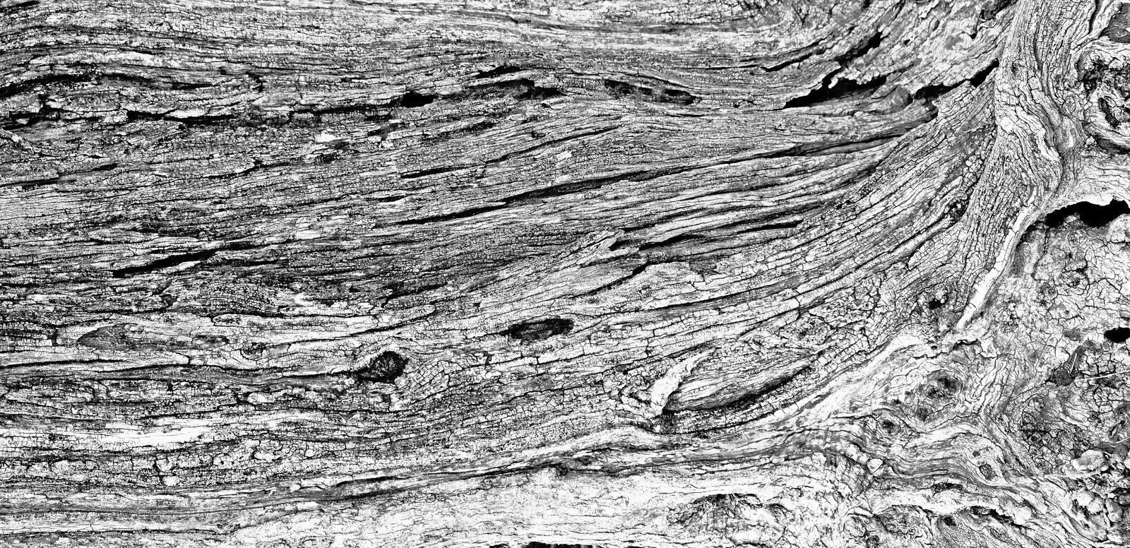Part of the trunk of an old olive tree with bark covered with a pattern of cracks.  stock images