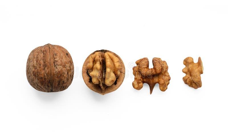 Part of walnut isolated on white background: whole, half, quarter royalty free stock photo