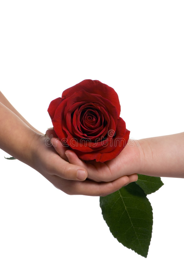 Partage d'une rose 2 photos libres de droits
