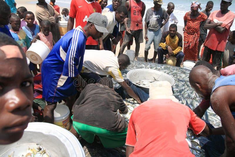 Partage des poissons après une pêche communale en Afrique image libre de droits