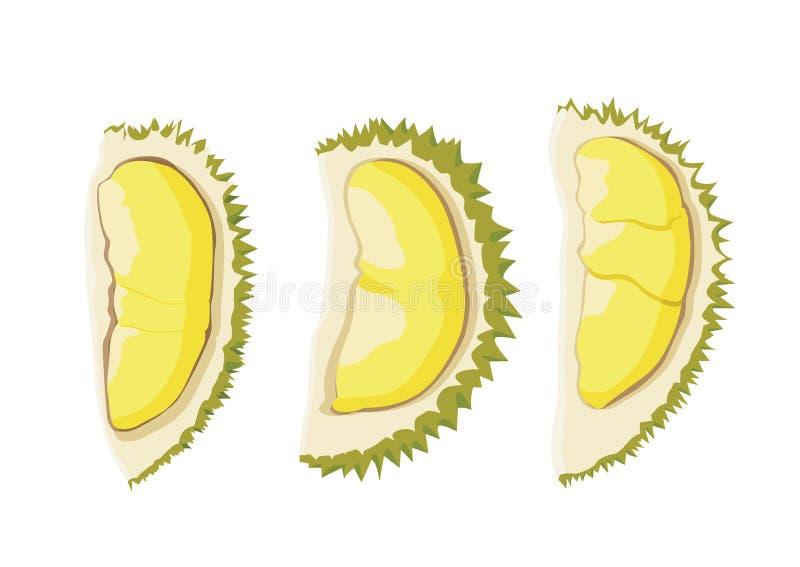 Parte amarela e madura da cor do fruto do Durian do durian ilustração royalty free