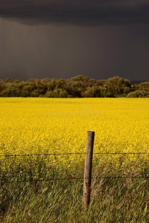 Parte anteriore di pioggia che si avvicina al raccolto di canola del Saskatchewan fotografia stock libera da diritti