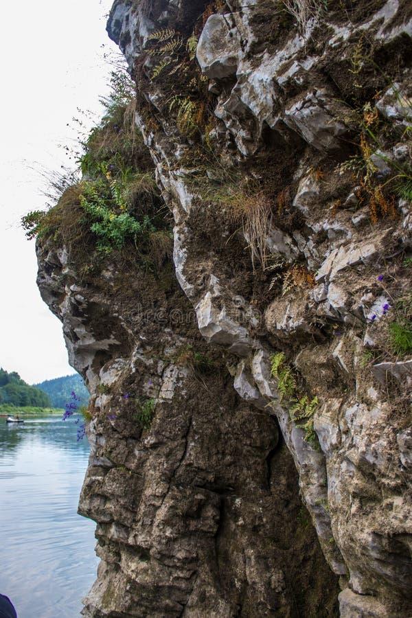 Parte da rocha com as plantas crescidas nela foto de stock