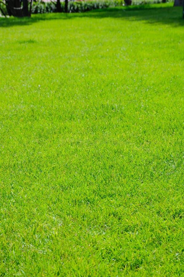 Parte de gramado verde ordenadamente aparado no dia de verão fotos de stock