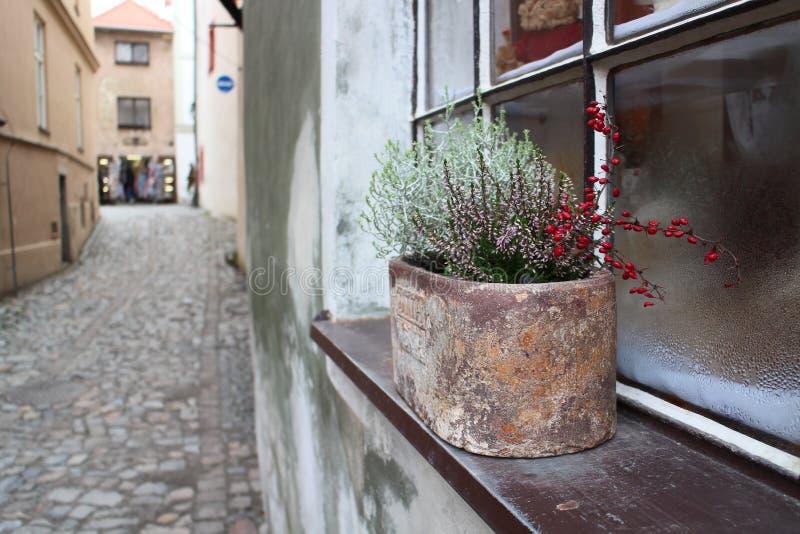 Parte de rua imagens de stock royalty free