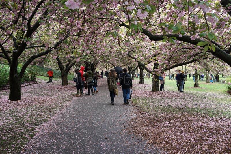 Parte 4 10 de Sakura Matsuri 2016 foto de stock royalty free