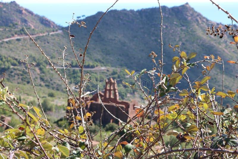 Parte de um arbusto em uma paisagem mediterrânea fotos de stock royalty free