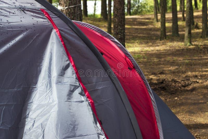 Parte de um close-up da barraca em uma floresta do pinho no verão fotografia de stock