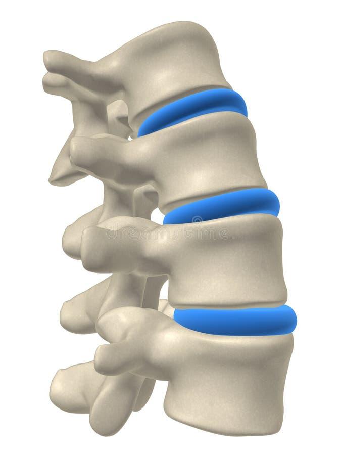 Parte de una espina dorsal libre illustration