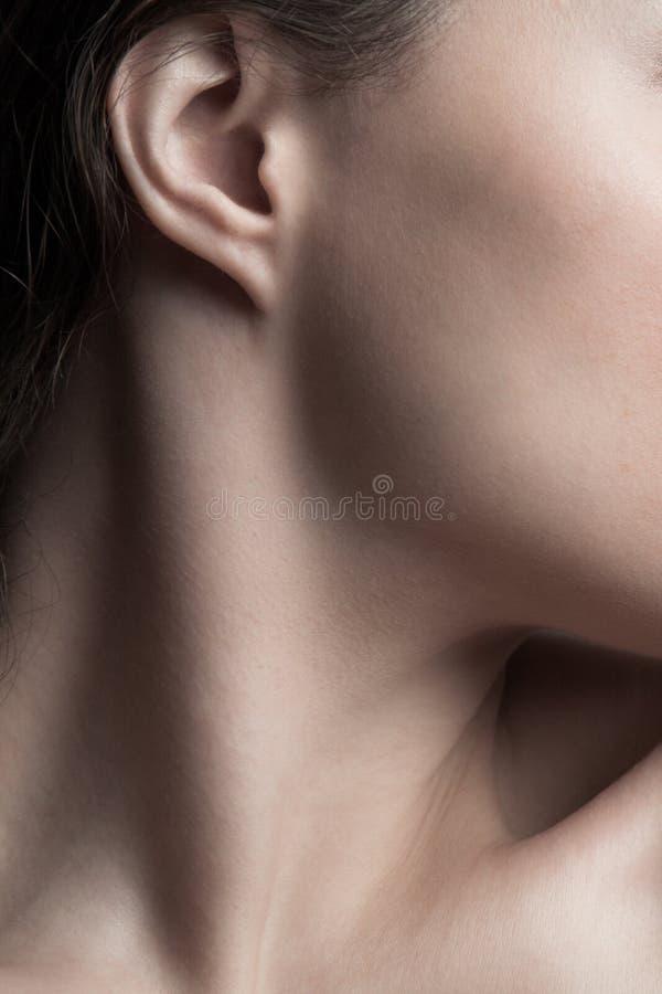 Parte del collo della giovane donna e del volto chiude il concetto di bellezza naturale fotografie stock