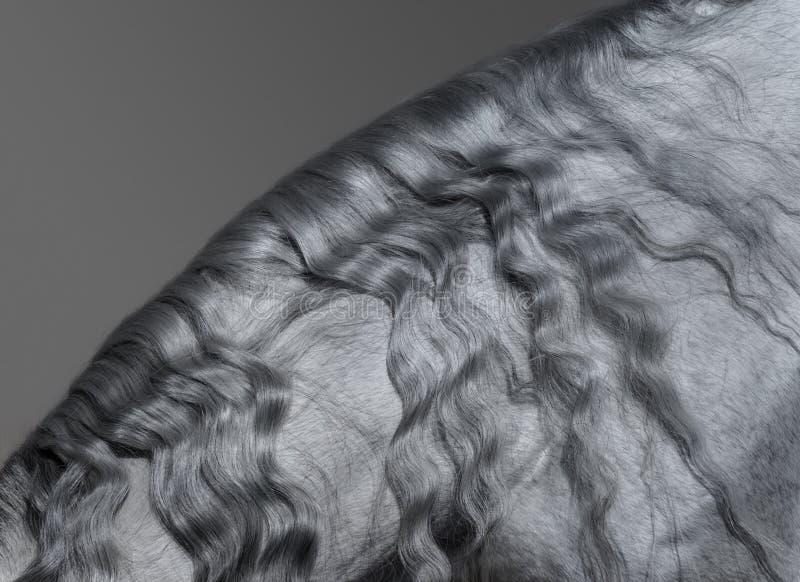 Parte del corpo animale Criniera grigia araba lunga fotografia stock libera da diritti