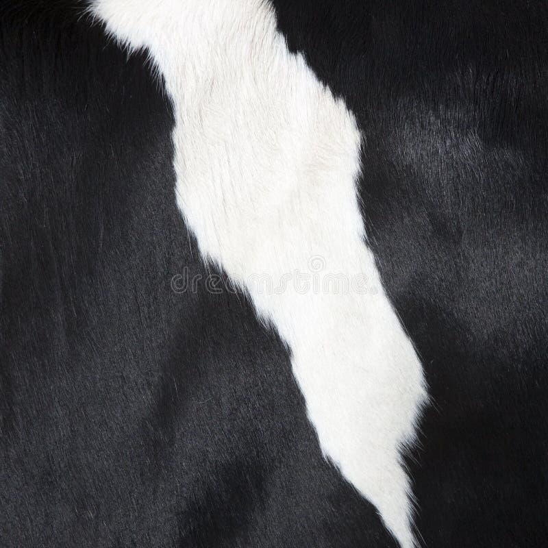 Parte del pellame in bianco e nero dal lato della mucca fotografia stock