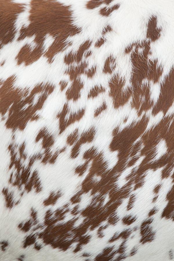Parte del pellame della mucca rossa e bianca fotografia stock libera da diritti
