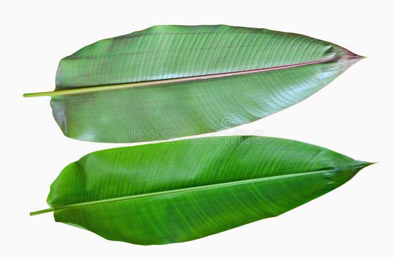 Parte delantera trasera y de las hojas de la ave del paraíso imagenes de archivo