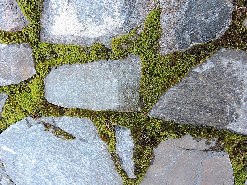 Parte della parete di pietra con il muschio verde della molla - come bella struttura immagini stock