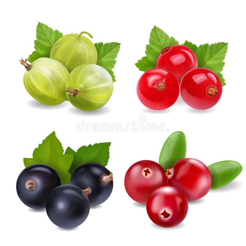 Parte di bacche realistica con il mirtillo rosso, il ribes rosso, l'uva spina ed il ribes nero su fondo bianco isolato illustrazione di stock