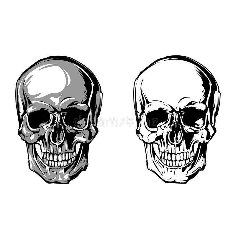 Parte dianteira da anatomia do crânio no fundo branco fotografia de stock royalty free