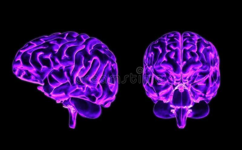 Parte dianteira e lado do cérebro ilustração royalty free