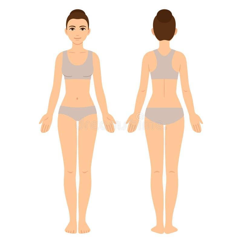 Parte dianteira e parte traseira do corpo fêmea ilustração stock