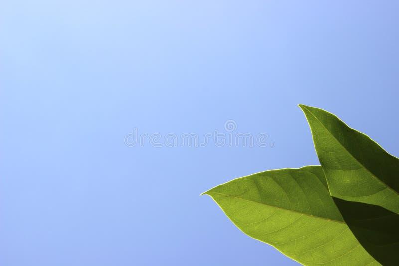 Parte inferior de hojas verdes en un cielo azul claro fotos de archivo